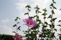 나라꽃 무궁화 전국축제