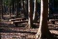 제주 봉개동 숲길
