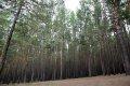 말라코프카 이스토치니크 자연공원 숲길