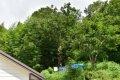 보삼마을 보호수