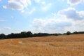 고흐가 자살을 시도한 밀밭