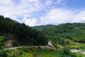 인제 원대리 자작나무 숲길 - 숲길 입구