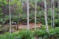 인제 원대리 자작나무 숲길 - 자작나무숲 쉼터