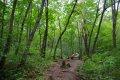 인제 원대리 자작나무 숲길 - 생태숲
