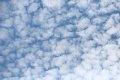국립수목원의 양털구름