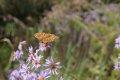 나비의 움직임