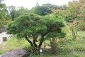 국립수목원에서 서식하는 다양한 나무들
