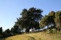 여미리 비자나무