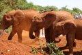 나이로비 코끼리 고아원