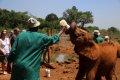 케냐 나이로비 코끼리 고아원