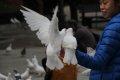 백 비둘기
