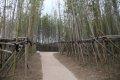 백제문화단지 대나무숲