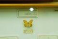 남미산 나비