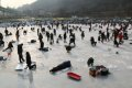 북한강 대성리 송어축제 2015