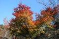 서울 남산공원 북측순환로 단풍