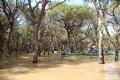 톤레삽 호수 숲지대