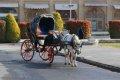나크쉐자한 광장 관광마차