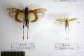 영월곤충박물관 소장품