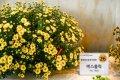 2015 고양국제 꽃 박람회 세계화훼교류전시