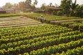 동탑 사덱의 정원