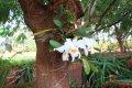국립열대식물원-카우아이(2)