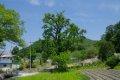연천 간파리 은행나무