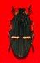 예천 곤충박물관-비단벌레