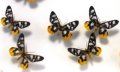 예천 곤충박물관-나방