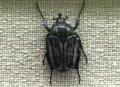 예천 곤충박물관