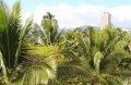호놀루루 풍경-1