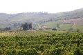 카스텔리나 인 키안티의 포도밭