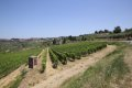 판자노 인 키안티의 포도밭