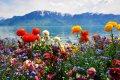 제네바 호수의 꽃밭