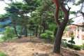 명천 소나무숲