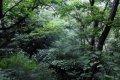 광치자연휴양림