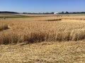 퓌르스텐펠트브룩의 곡식밭
