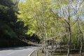난터우현의 봄