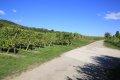 리보빌레 포도밭