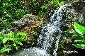 센트럴 식물원 강