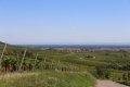 리보빌레의 포도밭