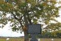 월동마을 팽나무