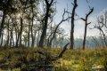 치트완 국립공원