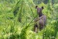 치트완 국립공원의 동물들