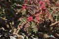 가까이서 본 소코트라 섬의 유향나무