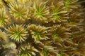 손가락 산호