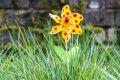 룩셈부르크의 봄의 꽃