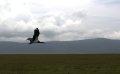 옹고롱고로 자연보존 지구