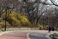 남산공원, 북측순환로의 봄(동향) 01