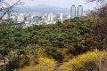 남산공원, 북측순환로의 봄(동향) 03