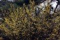 남산공원, 북측순환로의 봄(동향) 04